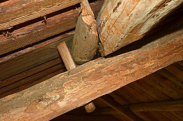De längsgående bjälkarna som håller upp taket hålls på plats på takstolarnas högben med genomborrad träplugg, en dymling.