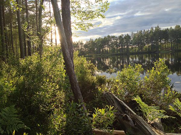 Jon Nydal: Sommarkväll vid Ljusgöl