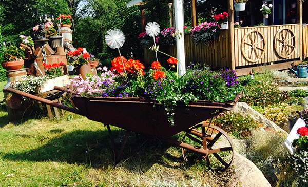 Laila Alexandersson: Blomsterprakt i sliten skottkärra