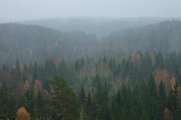 Uppifrån berget kunde man se att det småregnade över hela området.