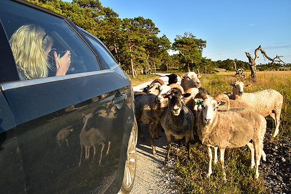 2015-08-06 Gotlandsbilder till bloggen  08
