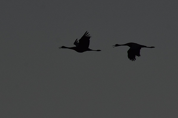 2015-08-14 Grillutflykt till Tjursbosjön 16