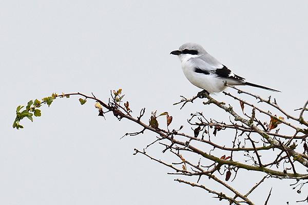 Fågelporträtt