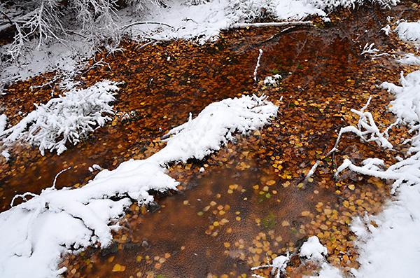 2016-11-06-skogsvandring-i-snofall-02
