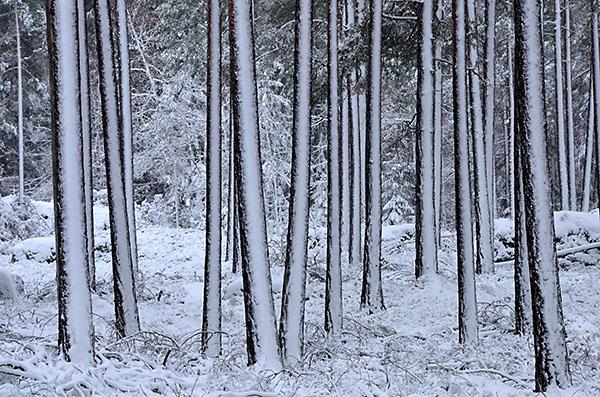 2016-11-06-skogsvandring-i-snofall-19