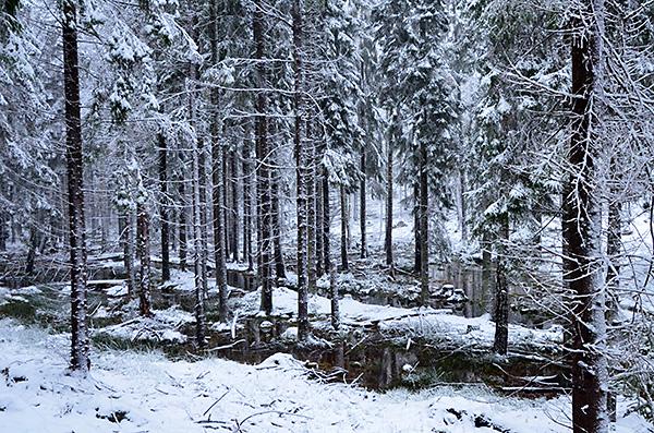 2016-11-06-skogsvandring-i-snofall-28