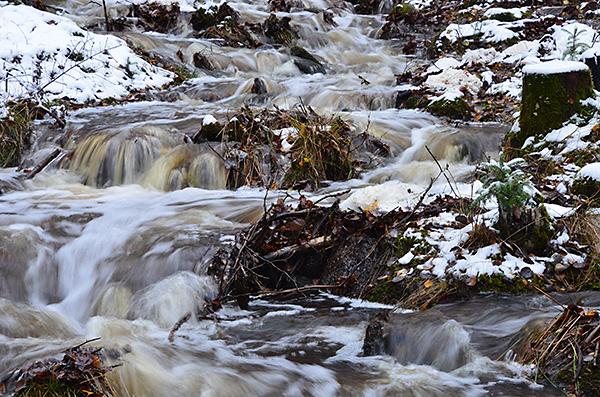 2016-11-06-skogsvandring-i-snofall-30