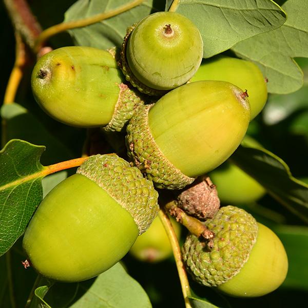 Frukt- och bärår